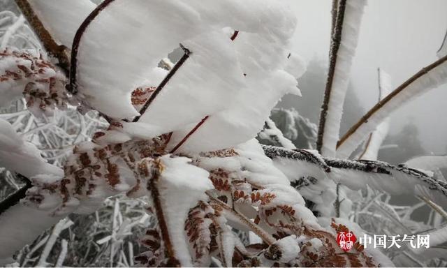 受到强冷空气影响,广西大面积出现强降温,湿冷天气持续,桂林资源县、全州县出现了雨凇雾淞,银装素裹美如画。放眼望去,满眼尽是银装素裹的迷人景象:晶莹的雨凇将资源装扮得如梦如幻,置身其中宛若到了童话世界一般;满枝满树的冰挂,犹如珠帘垂挂,分外晶莹耀眼,如此鲜少的美景甚是吸引人,一些游客兴奋得手足舞蹈,用冻得通红的手小心翼翼的抚摸着挂满雨凇的树枝。