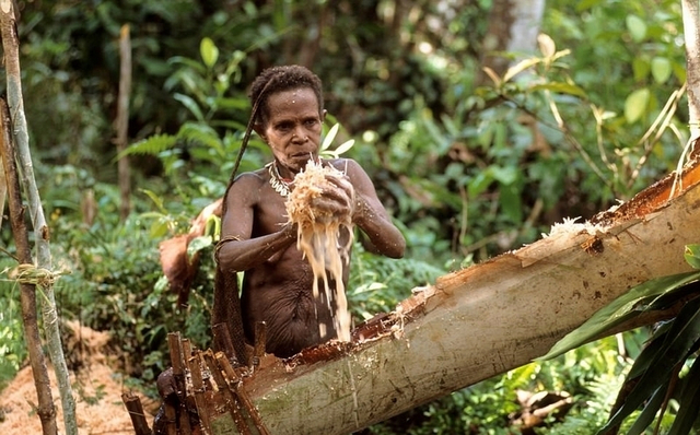 近日,一组由摄影师埃里克(Eric Baccega)拍摄于印度尼西亚东部巴布亚省的照片展示了当地科罗威部落的原始风貌。
