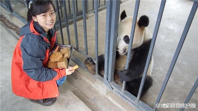 """85后南京女孩虞郎,说她是""""最强熊猫粉""""一点都不为过。"""