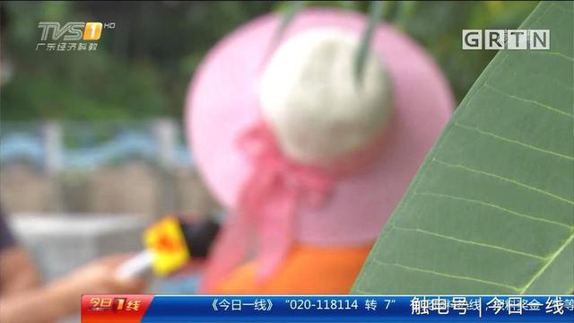 小娟今年14岁,辍学后她从老家惠州来到了广州打工。但当两个月后回到家里时,家人却发现她脸色发黄,还有腹胀的现象。到医院一查才发现,小娟原来是进行了取卵手术。原来,小娟在来到广州后,在一名网友的唆使下,进行了取卵手术,而一开始的检查,是在广州一家民营医院进行的。