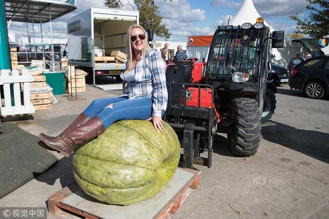 """当地时间2018年9月28日,英国莫尔文,在莫尔文秋季展览会上,年度巨型蔬菜大赛举行,民众纷纷带着各类""""巨无霸""""蔬菜前往测量称重。"""