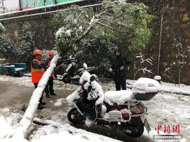 1月4日,江苏南京迎来大雪天气,城市里的不少树木由于无法承受积雪的重压而折断或被压倒。据气象部门预报,4日鄂豫皖苏等地有大到暴雪,其中安徽中部、江苏西南部等地局地有大暴雪(20~30毫米)。 朱晓颖 摄