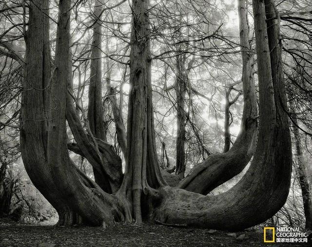 地球上生长着超过3万亿棵树,它们能净化空气、为鸟类和哺乳动物提供庇护场等等,不过有些树充当这些角色的时间要比另一些树长得多。比如说,箭袋树的寿命可达300年,橡树可存活一千年,狐尾松和紫杉则可生长数千年。
