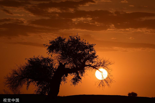 新疆巴州:夕照余晖 塔里木河畔风光壮美