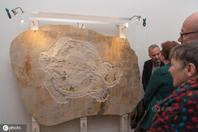 德国展出侏罗纪时期海龟化石