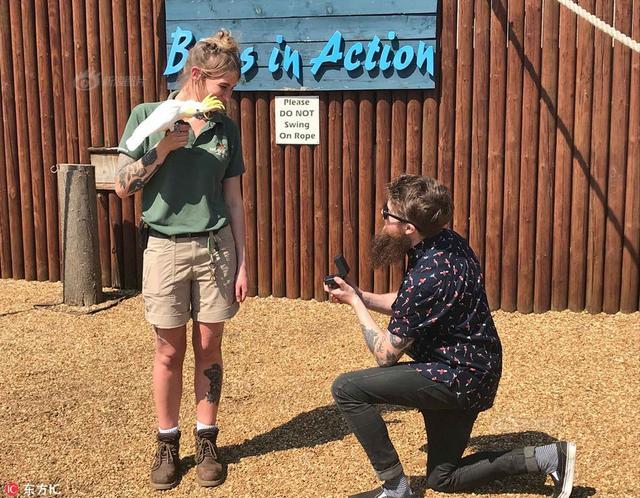 """27岁的John Stirling为了向女友求婚,竟然串通女友在沃本野生动物园(Woburn Safari Park)的同事,训练了一只凤头鹦鹉把求婚戒指""""送给""""女友Charlie Simpson。"""