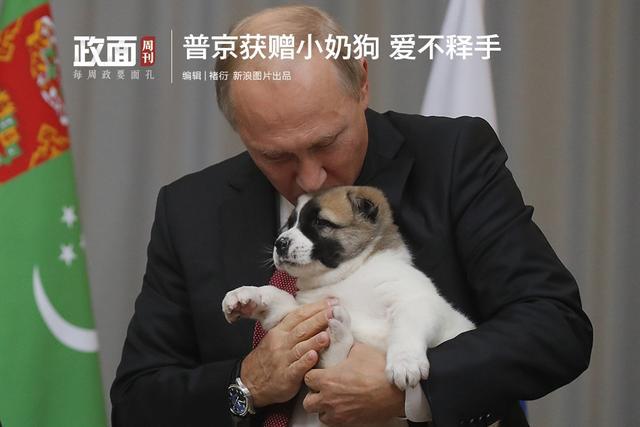 """【普京获赠小奶狗 抱在怀里爱不释手】10月11日,土库曼斯坦总统访问俄国,为普京祝贺65岁生日,并送了一只中亚牧羊犬幼崽作贺礼。这只小奶狗名叫""""韦尔内"""",意思是""""忠诚""""。硬汉普京是著名爱狗人士,闲暇时喜欢与狗嬉戏,他的狗狗很自由,可以在他的办公场所随便溜达。"""