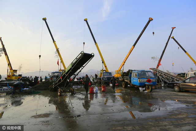 2017年02月15日,山东省日照市,2017年2月15日,山东省日照市,渔民正在收获加工海水养殖的海带、海虹。供图:视觉中国