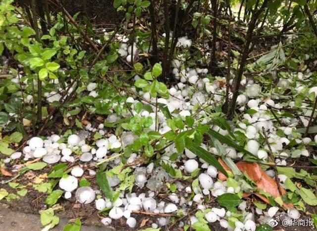 5月15日下午2时许,商洛商南县城及周边镇遭遇短时冰雹袭击,冰雹持续了十多分钟,最大直径40毫米。