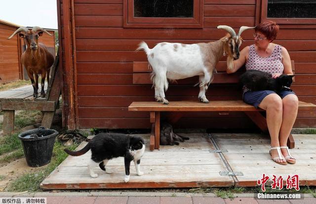 """当地时间2018年8月7日,比利时谢夫尔,Valerie Luycx创建了一个名为""""Les Petits Vieux""""的老年动物协会。该协会是专门为年迈的动物设立的,协会成员包括狗、猫、猪和山羊。(来源媒体:中新网)"""