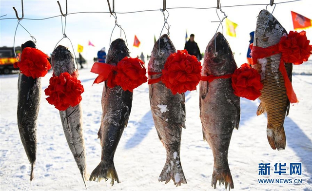 1月13日,内蒙古克什克腾旗达里诺尔冬捕活动现场展示的大鱼。当日,位于内蒙古东部贡格尔草原上的克什克腾旗达里诺尔湖展开大范围冬季捕鱼生产活动。作为内蒙古草原冬季旅游文化活动推出的经典品牌,达里诺尔冬捕活动每年都吸引来自各地的众多游客。 新华社记者 邓华 摄