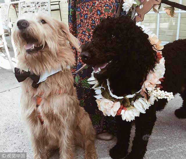 当地时间2018年9月29日,美国伯灵顿,伊森艾伦疗养院里的老人和工作人员为两只狗举办婚礼。