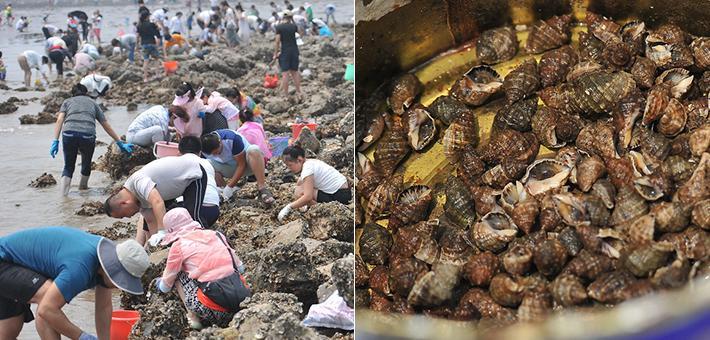北京山东市民扎堆天津海滩挖海鲜