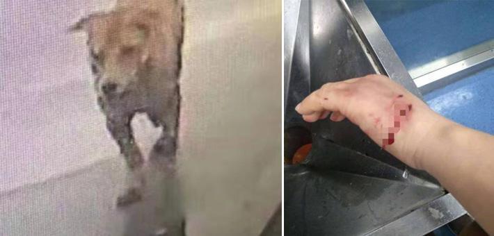 温州市区流浪狗连续咬伤73人