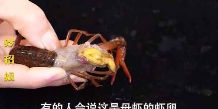 小龍蝦蝦頭里究竟是蝦黃or蝦屎?很多人一直都錯了