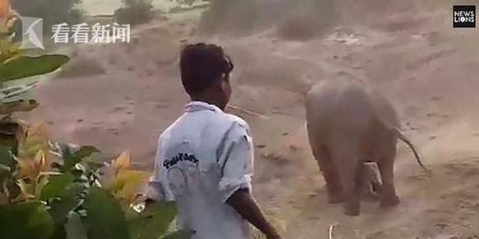 母象生下小象遭村民砸石頭 憤怒象群報復踩死一人