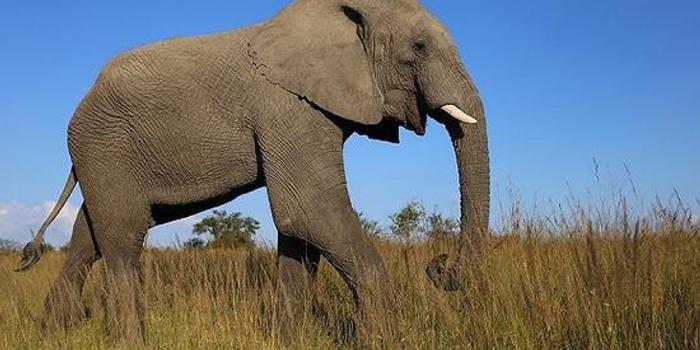 實在養不起了 津巴布韋再出口近百頭大象