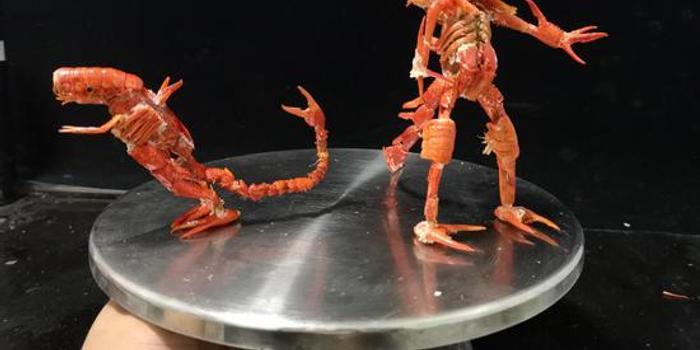 男幼師用小龍蝦殼做工藝品走紅 當事人:構思燒腦