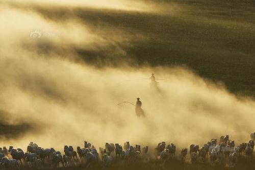 内蒙古锡林郭勒:夏季草原 骏马奔跑