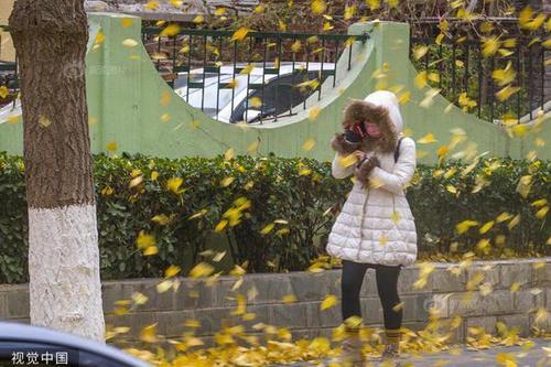 北京迎大年夜风降温气象 风吹落叶满地金黄
