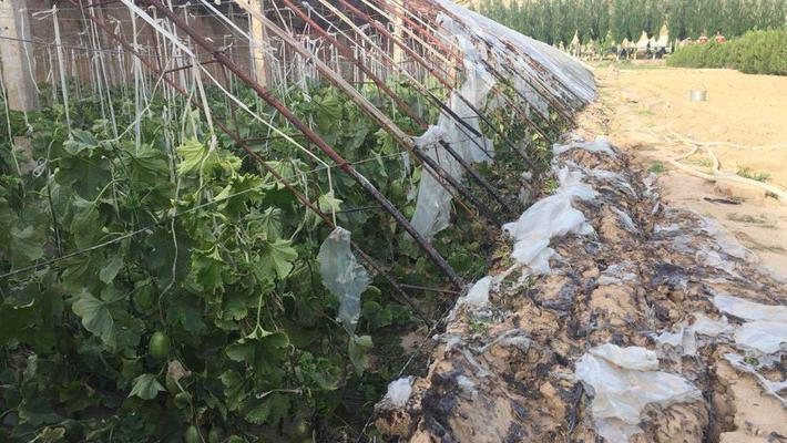 高压线掉落 农户损失超20万元