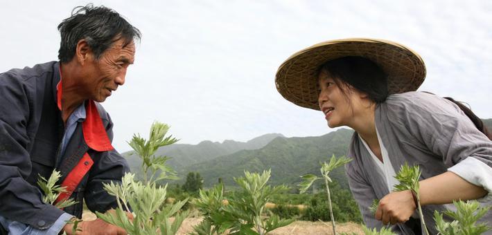 一个都不能少:一棵艾草的扶贫之旅