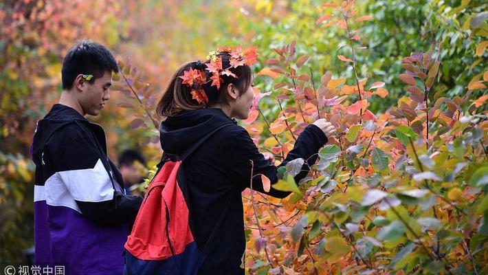 北京香山红叶节迎来客流高峰