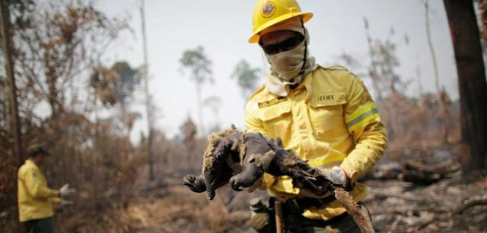 巴西亚马孙大火持续 动物被烧焦