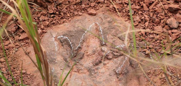 福建发现恐龙足迹化石364枚