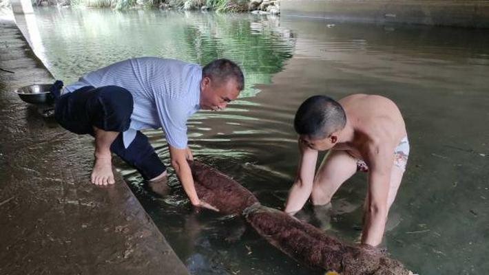 22.3公斤!镇海迄今为止发现的最大的野生娃娃鱼
