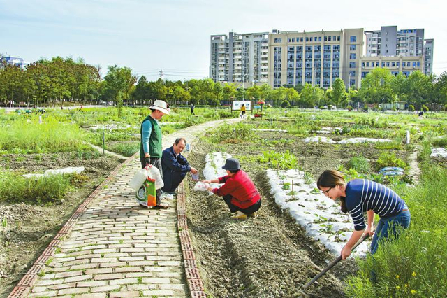 """郫都区郫筒街道书院社区居民正在打造""""可食地景""""。"""
