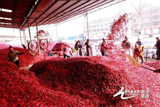 """山西省襄汾县赵康镇是有名的""""辣椒之乡""""。2017年,该镇椒农们走出分散经营思路,融合""""合作、基地、农户、科技""""经营模式,加入合作社集中经营发展。"""