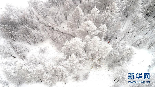 阿尔山市白狼岗雾凇景观(1月9日摄)。近日,内蒙古自治区阿尔山市白狼岗景区银装素裹,晶莹剔透的雾凇吸引了不少游客前来观光游览。 新华社记者刘磊摄