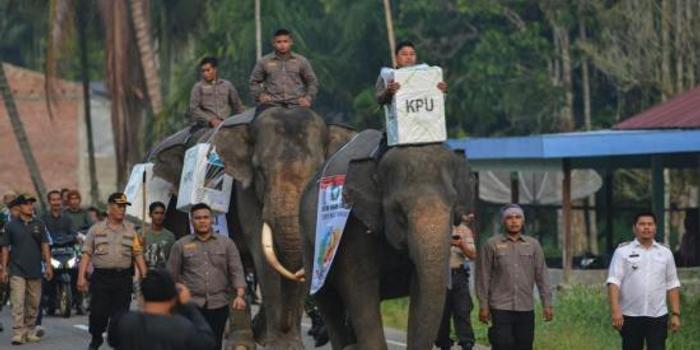 印尼大選結果公布在即 警方逮捕至少10名恐襲嫌犯