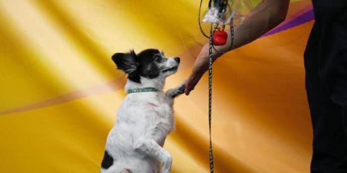 挪威官方稱近期數十只狗狗病死 癥狀相似病因未知