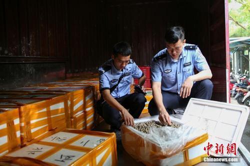 桂粤海接洽关系手破获特大年夜海产品私运案 涉案案值2亿元