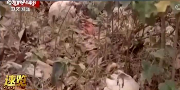 丟棄尸骨 印度醫院附近森林驚現數百具人類白骨