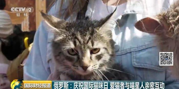 俄羅斯慶祝國際貓咪日 今天你擼貓了嗎?