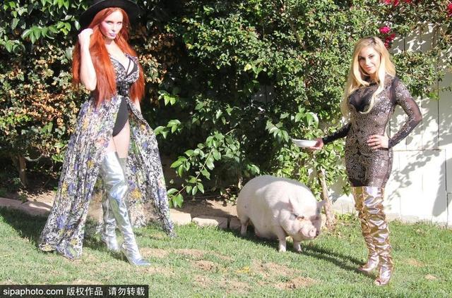 当地时间2018年10月11日,美国洛杉矶,菲比·普莱斯和友人Marcela Iglesias草坪拍写真,与超大宠物猪嬉戏,搔首弄姿毫无下限。