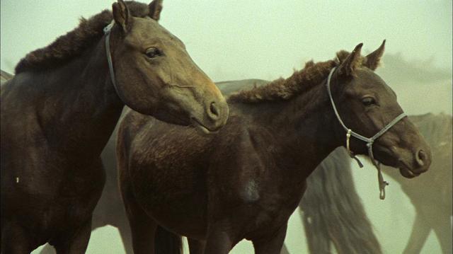 成吉思汗的两匹骏马