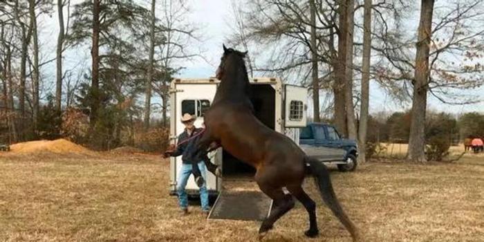 馬匹不愿上運馬車怎么辦?