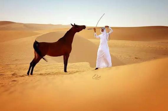 美麗勇敢的阿拉伯馬:發展歷史悠久 曾被用作戰馬圖片