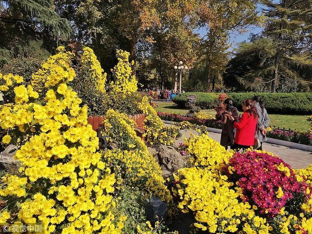 2018年11月8日,西安兴庆公园举行金秋花展,各种鲜花绽放,引现场游客争相拍照。