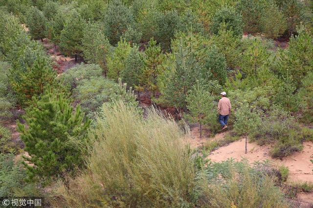 2018年9月26日,陕西榆林,神木毛乌苏沙漠,55岁的张应龙治沙15年,让43万亩荒漠变成了森林、牧场和农田,筑起了一个令人向往的世外桃源。