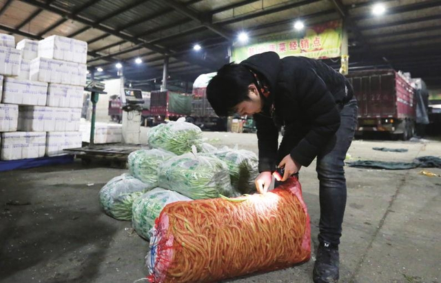 1月12日凌晨3时,90后的彭振准时出现在西三环的一家蔬菜批发市场里,开始他忙碌的一天。 彭振带着家人从安徽来西安打拼已有5年,从卖水果到卖蔬菜,虽不比朝九晚五的上班族轻松,但他乐在其中。