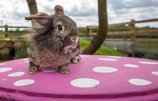 来认识一下这对疯狂的铲屎官夫妻,Emma Hartshorne和Wayne Kenward,他们为了让自家30只宠物兔过上奢华的生活,不惜斥资4000英镑(约合人民币3.5万元),将自家花园改造成了豪华游乐场,供兔主子消遣玩乐。