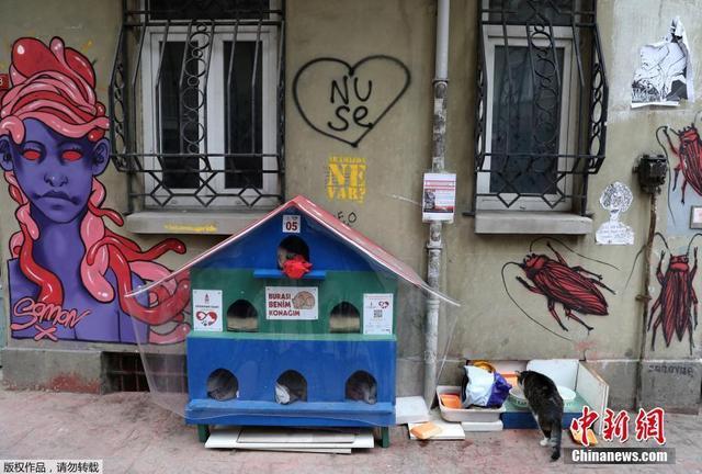 在土耳其的伊斯坦布尔,随处可见猫的身影。在每条街道的每个巷口,总有猫咪在闲逛,或是懒洋洋的晒太阳。