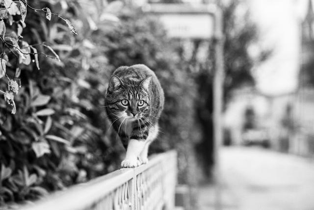 Sabrina Boem除了是一名摄影师,她还是一名名副其实的爱猫人士。因此在她的镜头下,猫咪的身影是少不了的,并且在她镜头下的猫咪都有一个共同的特点,这些猫咪要么行走在狭窄的通道上,要么蹲坐在狭窄的地方,又或者趴着,可以说这些可爱的猫咪天生就是杂技演员,在狭窄的通道如履平地。