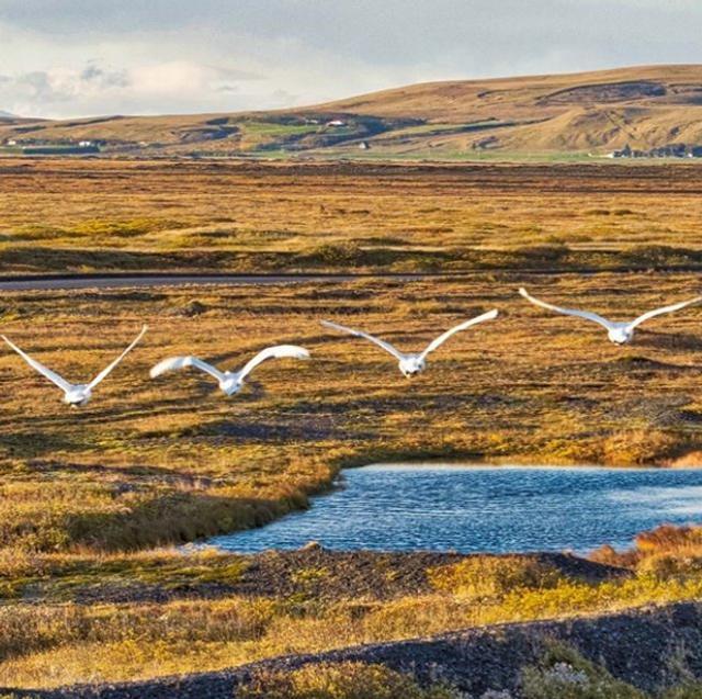 """新浪科技讯  北京时间12月7日消息,目前,Dronestagram网站最新公布2018年最佳无人机航拍照片,其中照片标题为""""城市的混凝土丛林""""获得城市类作品第一名。图中是冰岛空中的飞鸟。"""
