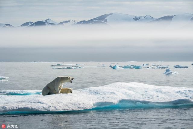 """29岁野生动物摄影师Florian Ledoux 用一组航拍图记录了北极熊的生存现状,从""""极地萌主""""沦为气候难民,全球气候变暖危机下北极熊的生存处境令人担忧。"""